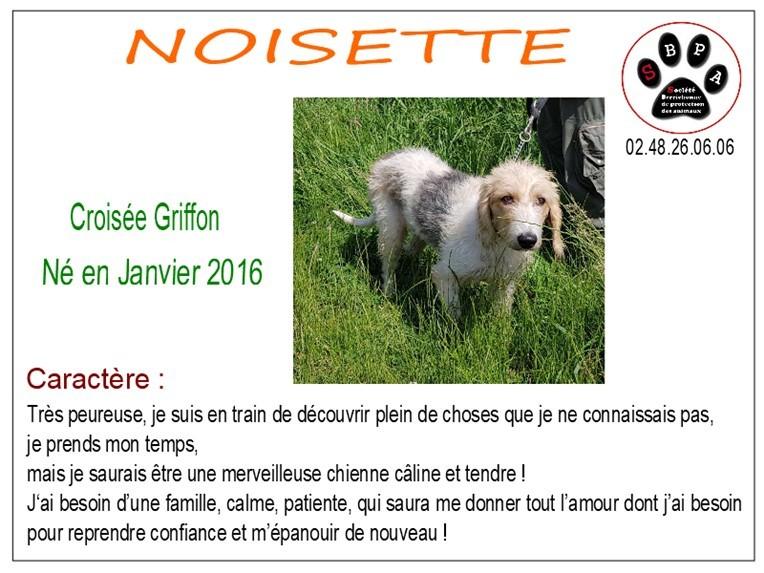 noisette-2